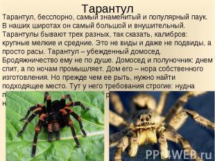 Тарантул, бесспорно, самый знаменитый и популярный паук. В наших широтах он самы