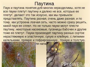 Паук и паутина понятия для многих неразделимы, хотя не все пауки плетут паутину