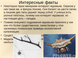 Некоторые пауки манерами копируют муравьев. Окраска у них такая же, и фигура пох