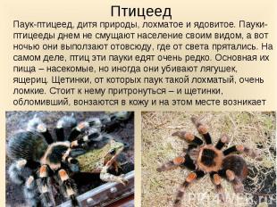 Паук-птицеед, дитя природы, лохматое и ядовитое. Пауки-птицееды днем не смущают