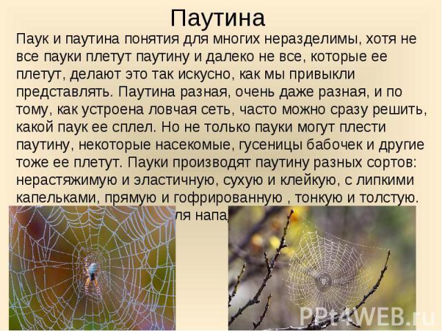 Паук и паутина понятия для многих неразделимы, хотя не все пауки плетут паутину и далеко не все, которые ее плетут, делают это так искусно, как мы привыкли представлять. Паутина разная, очень даже разная, и по тому, как устроена ловчая сеть, часто м…