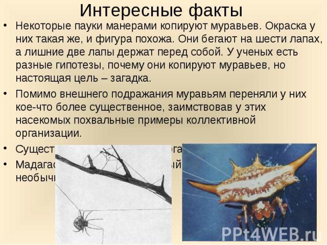Некоторые пауки манерами копируют муравьев. Окраска у них такая же, и фигура похожа. Они бегают на шести лапах, а лишние две лапы держат перед собой. У ученых есть разные гипотезы, почему они копируют муравьев, но настоящая цель – загадка. Некоторые…
