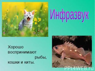 Хорошо воспринимают рыбы, кошки и киты. Хорошо воспринимают рыбы, кошки и киты.