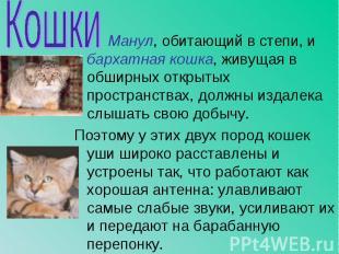Манул, обитающий в степи, и бархатная кошка, живущая в обширных открытых простра