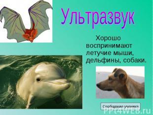 Хорошо воспринимают летучие мыши, дельфины, собаки. Хорошо воспринимают летучие