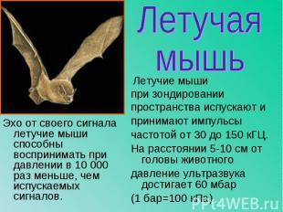 Эхо от своего сигнала летучие мыши способны воспринимать при давлении в 10 000 р