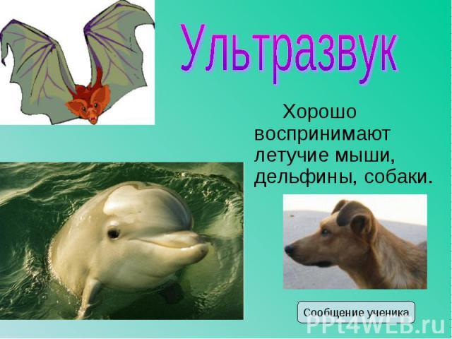 Хорошо воспринимают летучие мыши, дельфины, собаки. Хорошо воспринимают летучие мыши, дельфины, собаки.