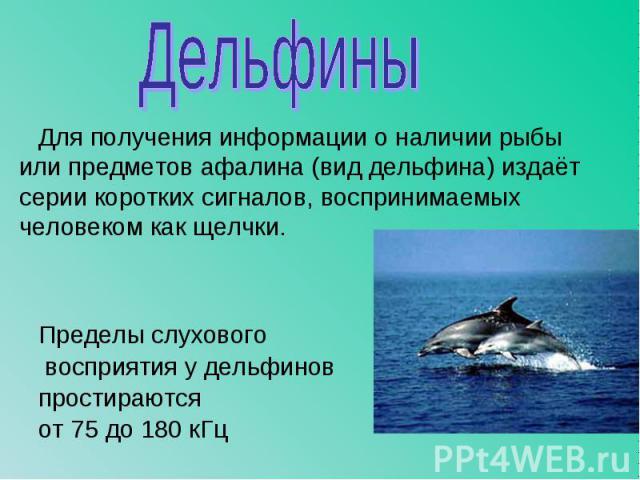 Для получения информации о наличии рыбы или предметов афалина (вид дельфина) издаёт серии коротких сигналов, воспринимаемых человеком как щелчки. Пределы слухового восприятия у дельфинов простираются от 75 до 180 кГц
