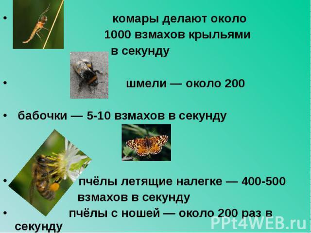 комары делают около комары делают около 1000 взмахов крыльями в секунду шмели — около 200 бабочки — 5-10 взмахов в секунду пчёлы летящие налегке — 400-500 взмахов в секунду пчёлы с ношей — около 200 раз в секунду