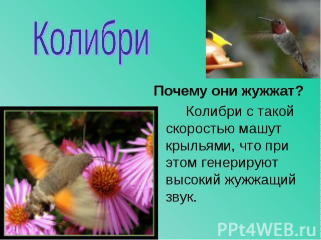 Почему они жужжат? Почему они жужжат? Колибри с такой скоростью машут крыльями, что при этом генерируют высокий жужжащий звук.
