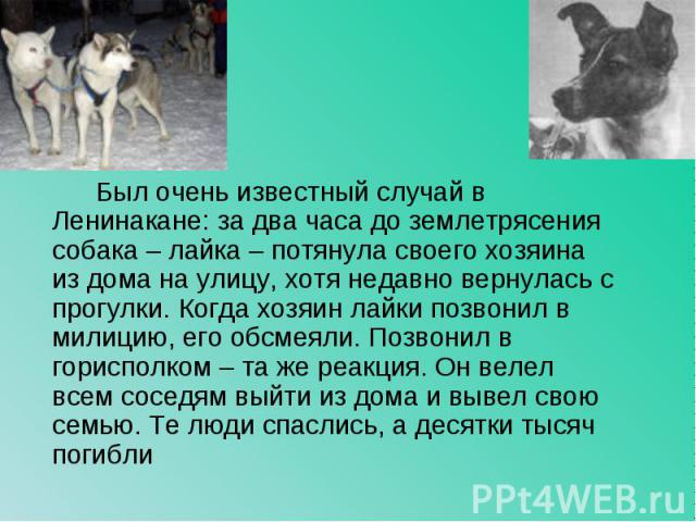 Был очень известный случай в Ленинакане: за два часа до землетрясения собака – лайка – потянула своего хозяина из дома на улицу, хотя недавно вернулась с прогулки. Когда хозяин лайки позвонил в милицию, его обсмеяли. Позвонил в горисполком – та же р…