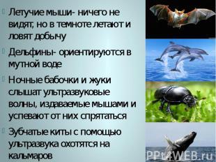 Летучие мыши- ничего не видят, но в темноте летают и ловят добычу Дельфины- орие