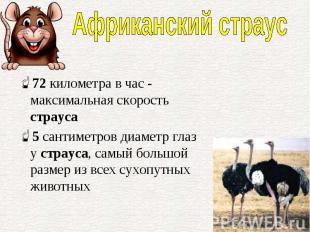 72километра в час - максимальная скорость страуса 72километра в час