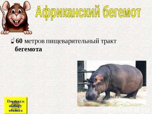 60метров пищеварительный тракт бегемота 60метров пищеварительный тра