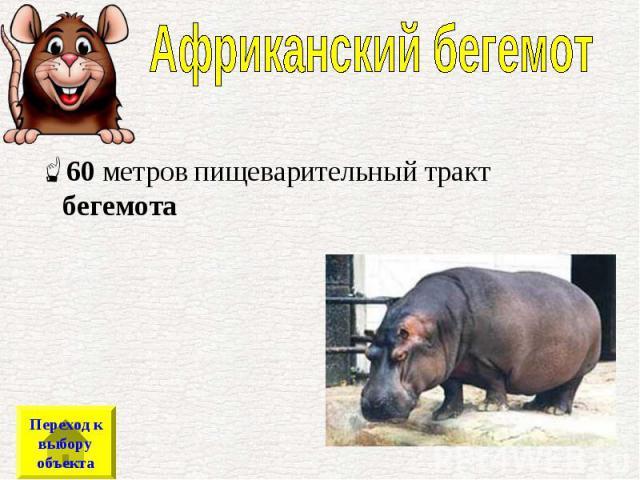 60метров пищеварительный тракт бегемота 60метров пищеварительный тракт бегемота