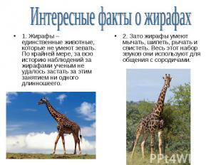 1. Жирафы – единственные животные, которые не умеют зевать. По крайней мере, за