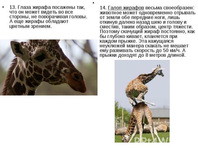 13. Глаза жирафа посажены так, что он может видеть во все стороны, не поворачивая головы. А еще жирафы обладают цветным зрением. 13. Глаза жирафа посажены так, что он может видеть во все стороны, не поворачивая головы. А еще жирафы обладают цветным …
