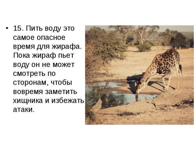15. Пить воду это самое опасное время для жирафа. Пока жираф пьет воду он не может смотреть по сторонам, чтобы вовремя заметить хищника и избежать атаки. 15. Пить воду это самое опасное время для жирафа. Пока жираф пьет воду он не может смотреть по …