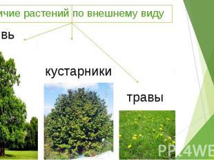 Различие растений по внешнему виду