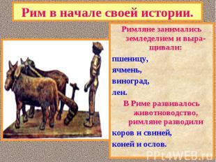 Римляне занимались земледелием и выра-щивали: Римляне занимались земледелием и в