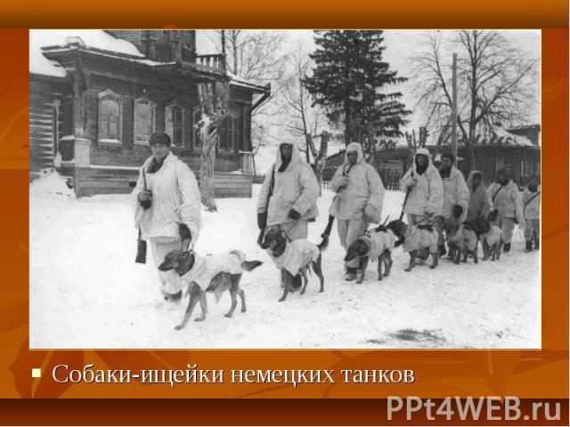 Собаки-ищейки немецких танков Собаки-ищейки немецких танков