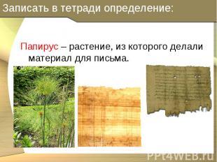 Папирус – растение, из которого делали материал для письма. Папирус – растение,