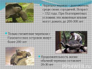 Только гигантские черепахи с Галапагосских островов живут более 200 лет Только г
