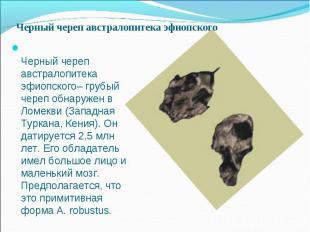 Черный череп австралопитека эфиопского– грубый череп обнаружен в Ломекви (Западн