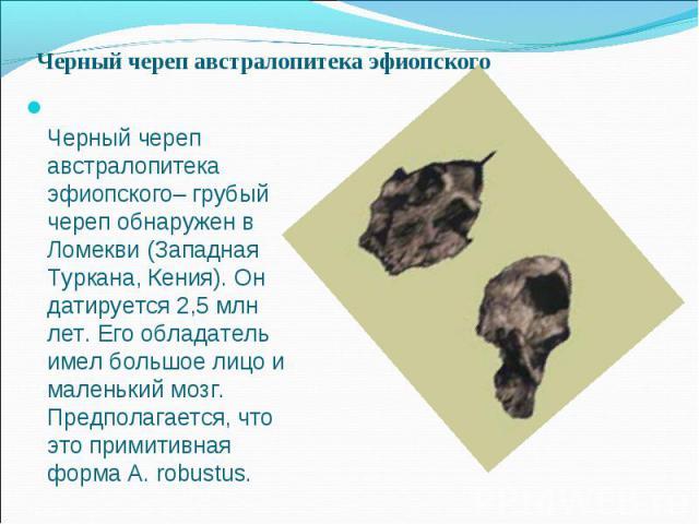 Черный череп австралопитека эфиопского– грубый череп обнаружен в Ломекви (Западная Туркана, Кения). Он датируется 2,5 млн лет. Его обладатель имел большое лицо и маленький мозг. Предполагается, что это примитивная форма A. robustus. Черный череп авс…