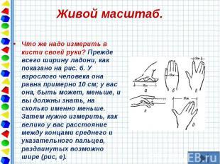 Что же надо измерить в кисти своей руки? Прежде всего ширину ладони, как показан