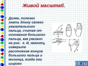 Далее, полезно знать длину своего указательного пальца, считая от основания боль