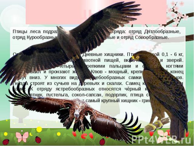 Птицы леса Птицы леса подразделяются на четыре отряда: отряд Дятлообразные, отряд Курообразные, отряд Ястребообразные и отряд Совообразные. Отряд Ястребообразные, или Дневные хищники. Птицы массой 0,1 - 6 кг, приспособлены к питанию животной пищей, …