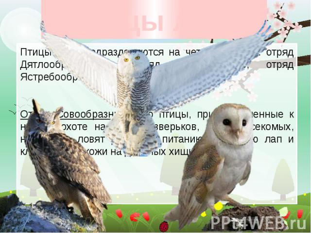 Птицы леса Птицы леса подразделяются на четыре отряда: отряд Дятлообразные, отряд Курообразные, отряд Ястребообразные и отряд Совообразные. Отряд Совообразные. Это птицы, приспособленные к ночной охоте на мелких зверьков, птиц, насекомых, некоторые …