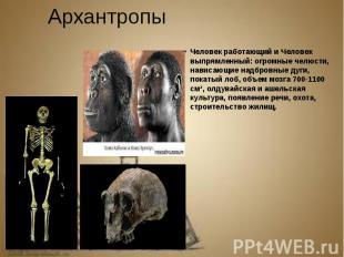 Архантропы Человек работающий и Человек выпрямленный: огромные челюсти, нависающ
