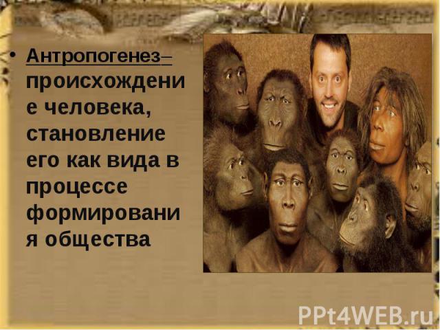 Антропогенез– происхождение человека, становление его как вида в процессе формирования общества Антропогенез– происхождение человека, становление его как вида в процессе формирования общества