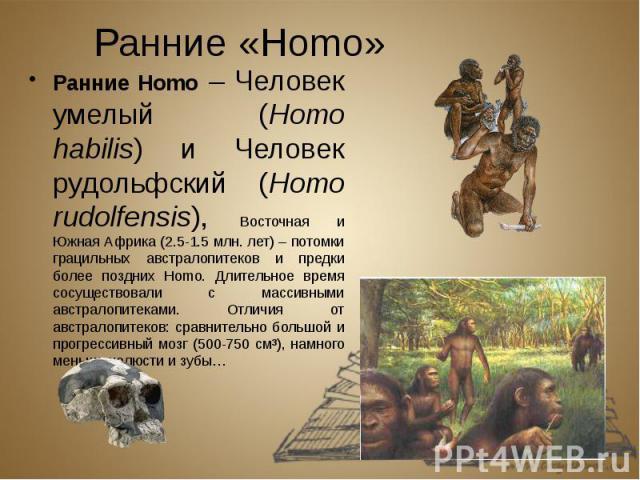 Ранние «Homo» Ранние Homo – Человек умелый (Homo habilis) и Человек рудольфский (Homo rudolfensis), Восточная и Южная Африка (2.5-1.5 млн. лет) – потомки грацильных австралопитеков и предки более поздних Homo. Длительное время сосуществовали с масси…