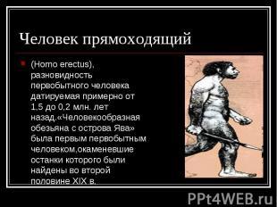Человек прямоходящий (Homo erectus), разновидность первобытного человека датируе