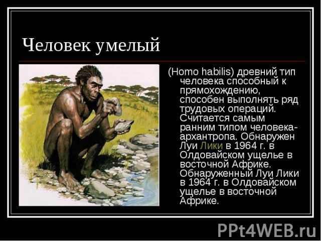 Человек умелый (Homo habilis) древний тип человека способный к прямохождению, способен выполнять ряд трудовых операций. Считается самым ранним типом человека-архантропа. Обнаружен Луи Лики в 1964 г. в Олдовайском ущелье в восточной Африке. Обнаружен…