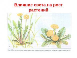 Влияние света на рост растений
