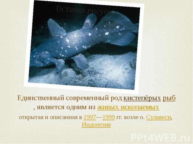 Единственный современный род кистепёрых рыб, является одним из живых ископаемых открытая и описанная в 1997—1999 гг. возле о. Сулавеси, Индонезия