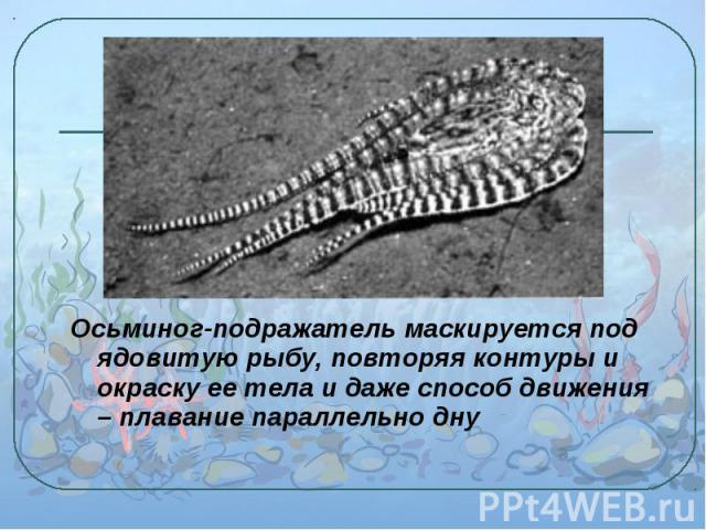 Осьминог-подражатель маскируется под ядовитую рыбу, повторяя контуры и окраску ее тела и даже способ движения – плавание параллельно дну Осьминог-подражатель маскируется под ядовитую рыбу, повторяя контуры и окраску ее тела и даже способ движения – …