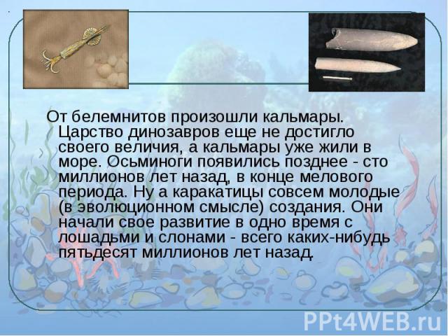 От белемнитов произошли кальмары. Царство динозавров еще не достигло своего величия, а кальмары уже жили в море. Осьминоги появились позднее - сто миллионов лет назад, в конце мелового периода. Ну а каракатицы совсем молодые (в эволюционном смысле) …