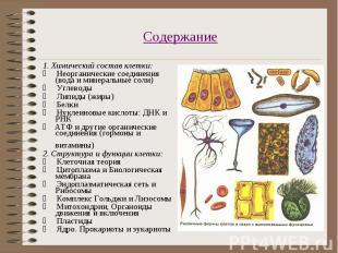 1. Химический состав клетки: 1. Химический состав клетки: &nbs