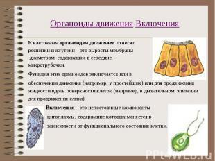 К клеточным органоидам движения относят К клеточным органоидам движения относят
