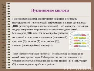 Нуклеиновые кислоты обеспечивают хранение и передачу наследственной (генетическо