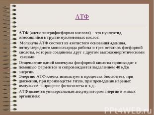 АТФ (аденозинтрифосфорная кислота) – это нуклеотид, относящийся к группе нуклеин