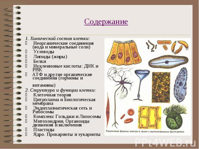 1. Химический состав клетки: 1. Химический состав клетки:  Неорганические соединения (вода и минеральные соли)  Углеводы  Липиды (жиры)  Белки &nbs…