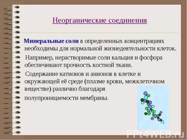 Минеральные соли в определенных концентрациях необходимы для нормальной жизнедеятельности клеток. Минеральные соли в определенных концентрациях необходимы для нормальной жизнедеятельности клеток. Например, нерастворимые соли кальция и фосфора обеспе…