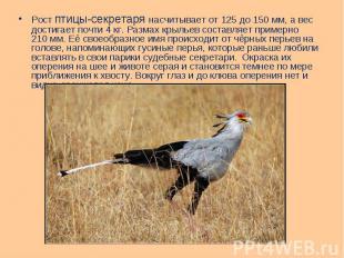 Рост птицы-секретаря насчитывает от 125 до 150мм, а вес достигает почти 4&