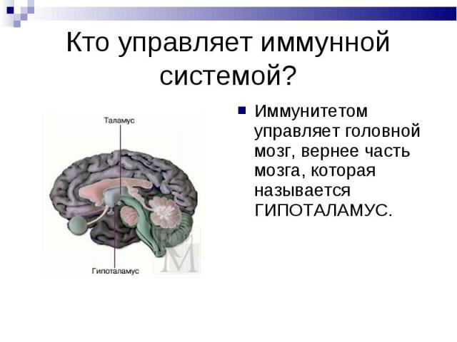 Иммунитетом управляет головной мозг, вернее часть мозга, которая называется ГИПОТАЛАМУС. Иммунитетом управляет головной мозг, вернее часть мозга, которая называется ГИПОТАЛАМУС.